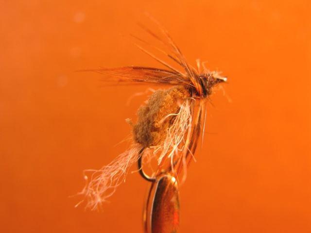 Field-worn Floating Caddis Emerger. One successful day in 2005, I hooked 34 trout on Pennsylvania's Spring Creek on this fly. Then I decided to save it before losing it, as an example of pattern durability and effectiveness. Note the teeth marks, yet the pattern is intact, ready for more trout.