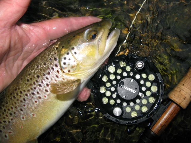 Another Spring Creek brown taken during a sulphur hatch on the Floating Caddis Emerger.