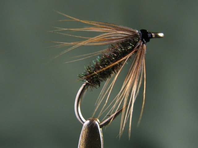 Brown Hackle