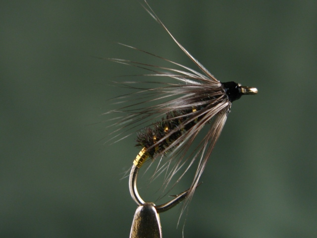 Gray Hackle Peacock