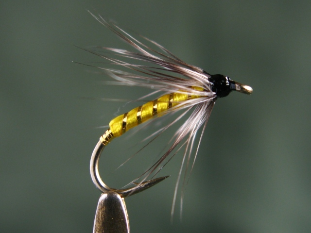 image: Gray Hackle Yellow fly