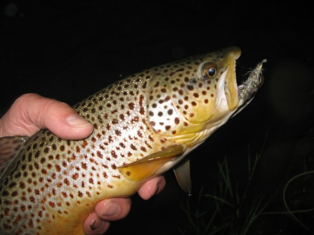 Another very nice brown on the white krystal bugger.