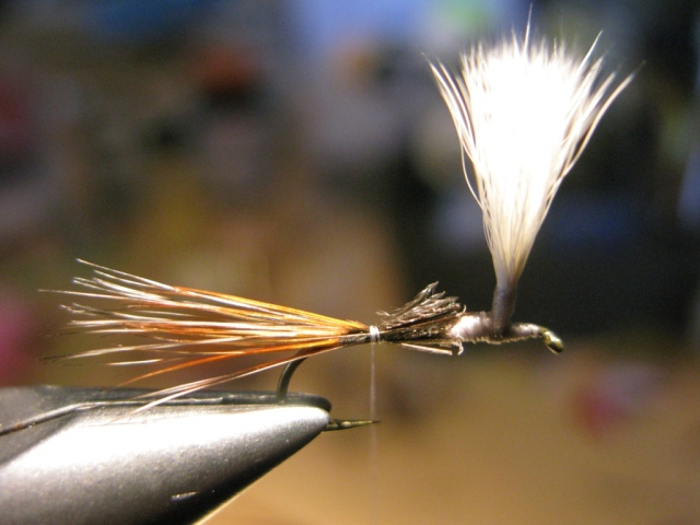 A mix of brown and grizzly spade hackle fibers (spade hackles comes from the outer edges of dry fly necks or capes.