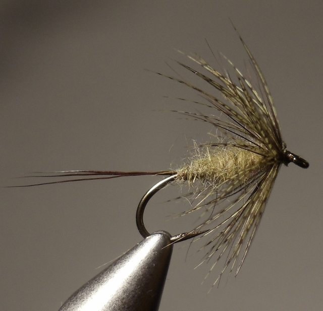 Easternized Green Drake - tied and photographed by Bill Shuck.