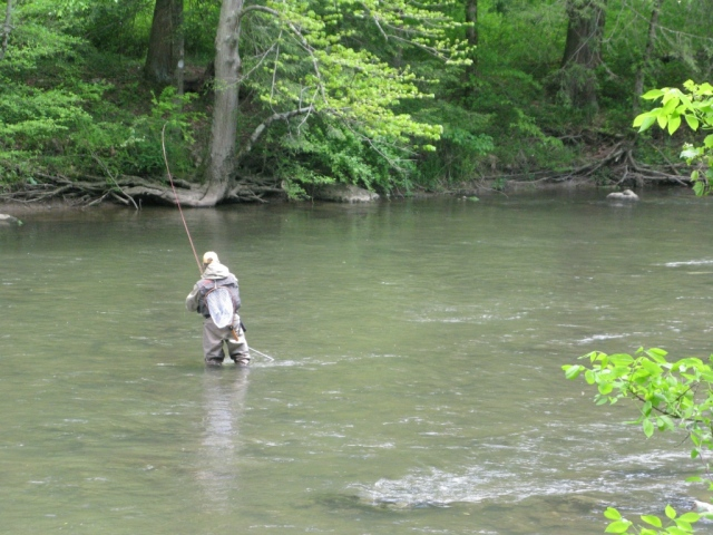 "This is the first in a series of photos with Bob playing the nice trout - after more than three hours of casting to this fish, he finally got the ""right drift."""