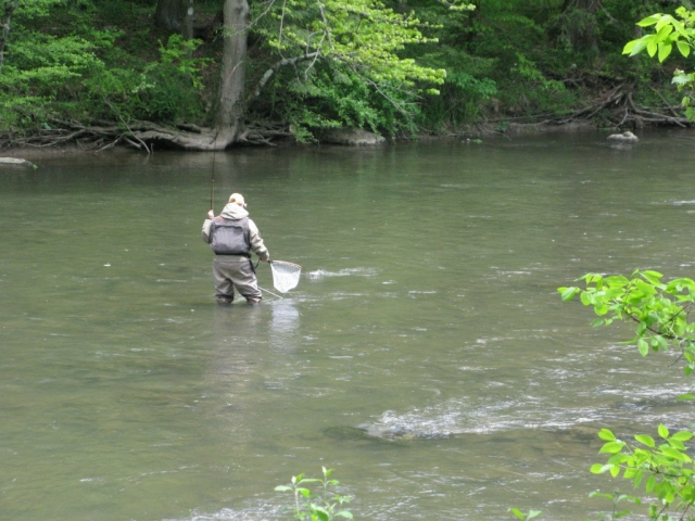Bob works the trout closer to the net.