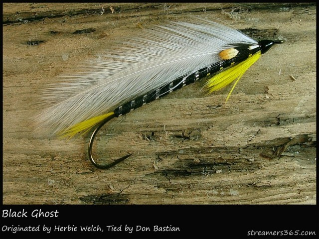 Herb welch originated the Black Ghost, but Carrie tied other popular patterns originated by other tiers of her time; she added her unique method of construction ad banded heads to all her flies. I want to start replicating some of these patterns as she did, in her style.
