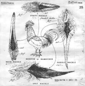 A rooster and diagram illustrating where specific feathers that fly tiers use come from on thee bird's body.